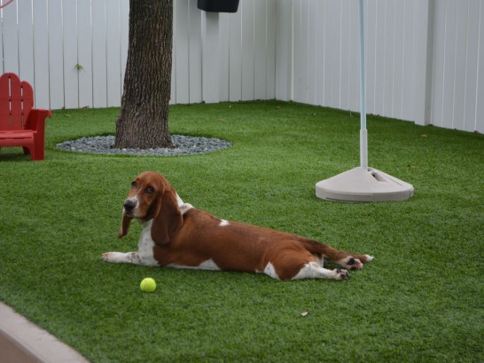 Artificial Grass Photos: Grass Turf West Odessa, Texas Hotel For Dogs, Dogs Runs