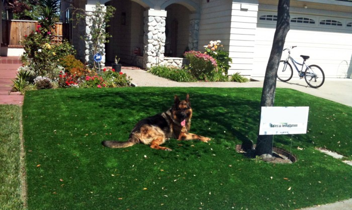 Pet Grass, Artificial Grass For Dogs in Texas